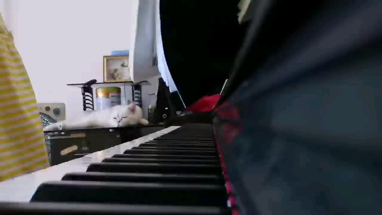 毛孩子会喜欢听一些小朋友的歌演奏视频